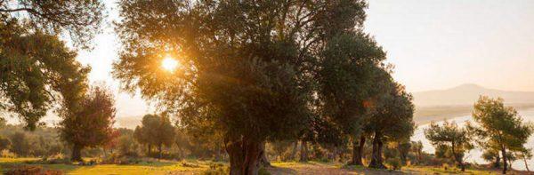 Domingo de ramos 14 de abril comentario de la liturgia Mariola López